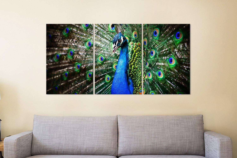 Peacock Wall Art Great Gift Ideas Online