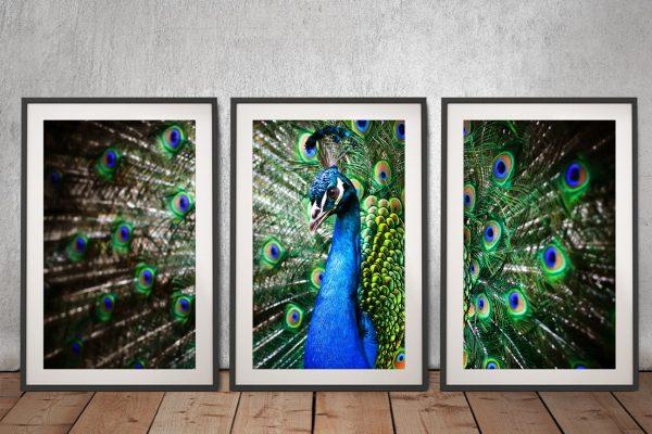 Framed Peacock 3-Piece Wall Art Cheap Online