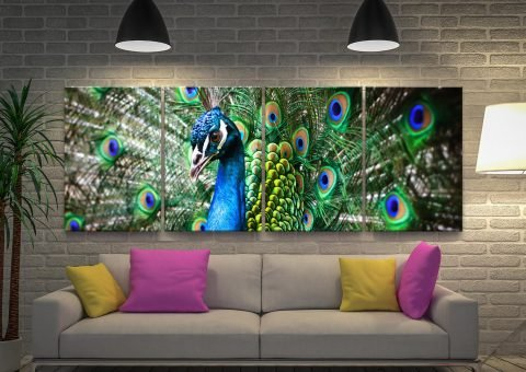 Stunning Wildlife Photography Wall Art AU