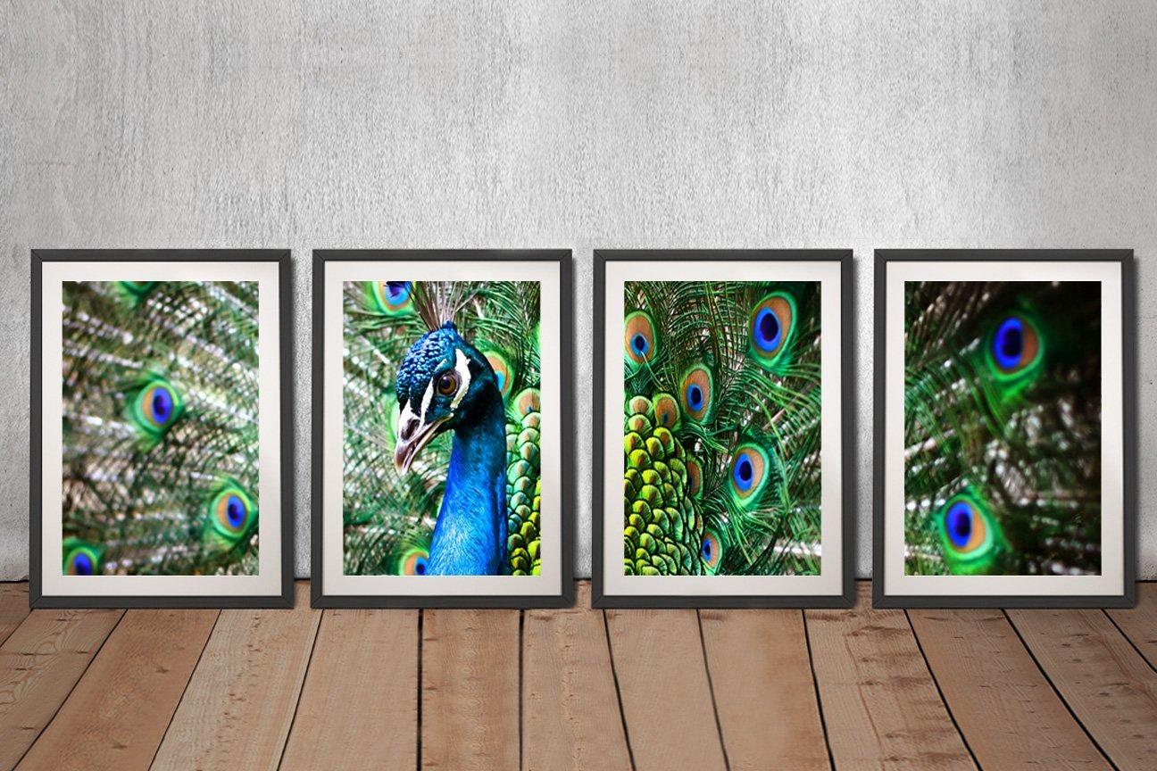 Buy an Amazing Peacock 4-Piece Canvas Set
