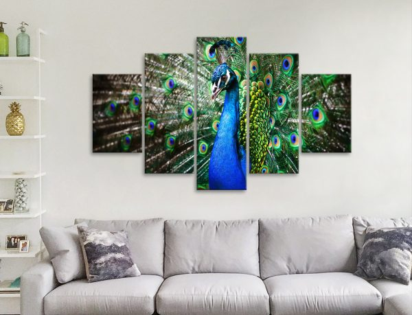 Amazing Peacock 5-Piece Wall Art for Sale