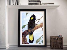 Black Cockatoo Linda Callaghan Art Print