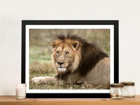 African Lion Framed Wildlife Wall Art