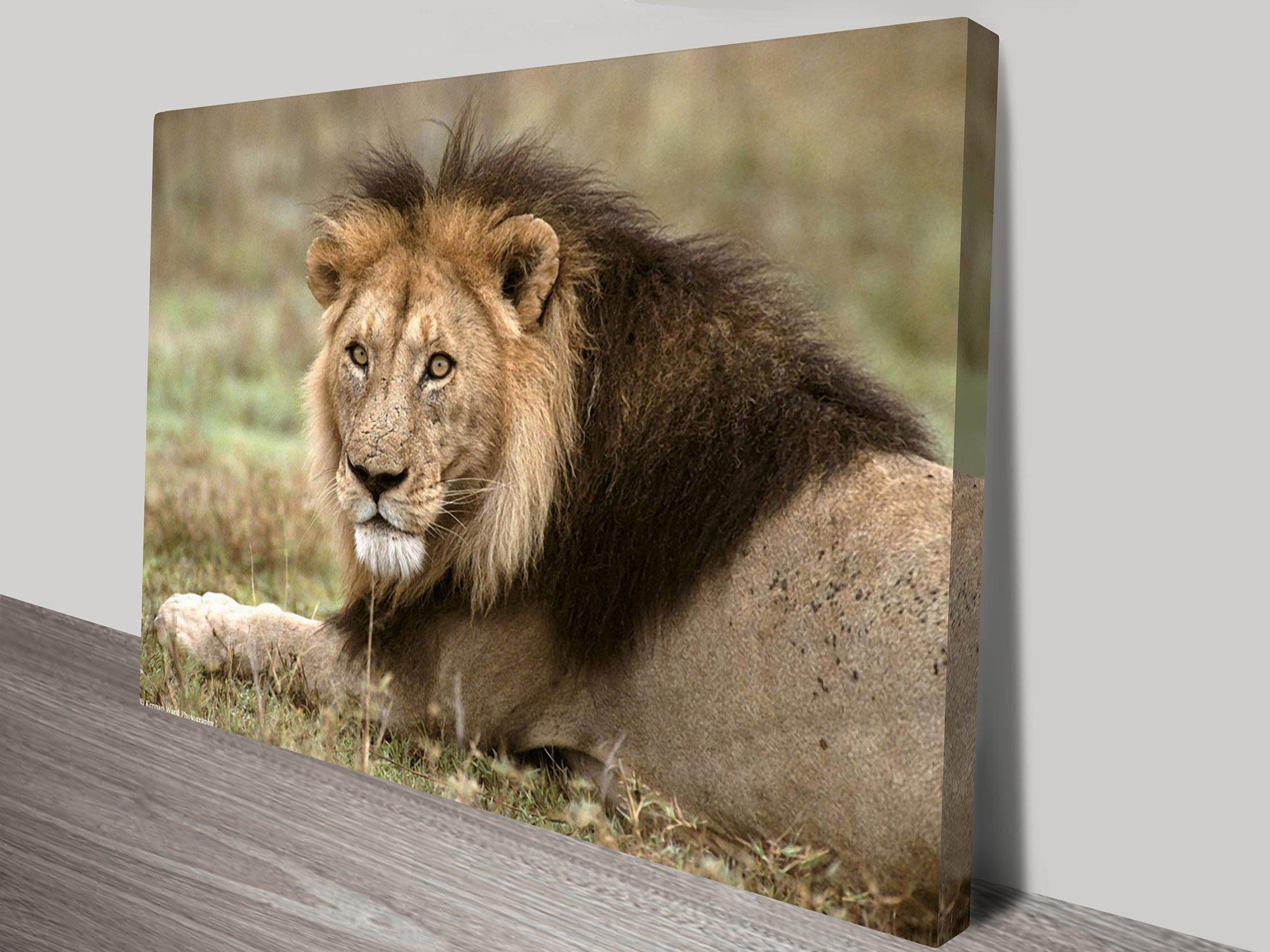 African Lion Art Home Decor Ideas Online