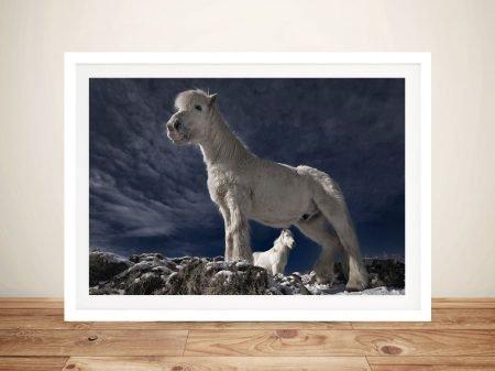 Fjord Horse Framed Print on Canvas