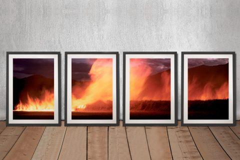 Cane Fire 4-Piece Canvas Art Set