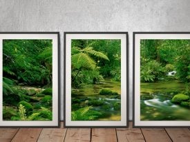 Daintree Rainforest 3-Piece Art Set