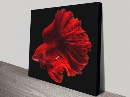 Halfmoon Super Red Colourful Fish Art