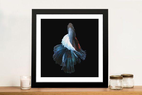 Siamese Fighting Fish Photographic Print