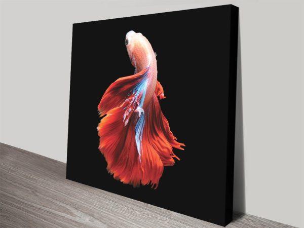 Betta Fish Colourful Abstract Artwork