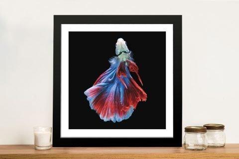 Siamese Fighting Fish No.3 Framed Print