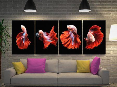 Siamese Fighting Fish Quad Canvas Art