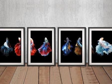 Framed Siamese Fighting Fish 4-Panel Set