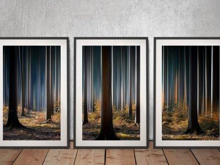 Buy Tall Trees 3-Piece Wall Art Set