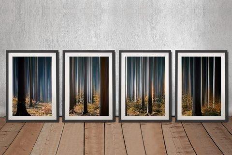 Tall Trees Framed 4-Panel Set of Prints AU