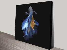 Stretched Canvas Fighting Fish Wall Art
