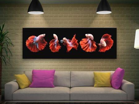 Siamese Fighting Fish Panoramic Wall Art