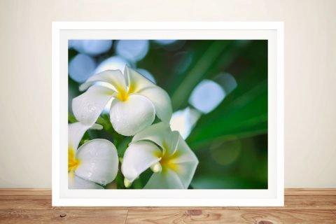 The Fragrance Framed Frangipani Print AU