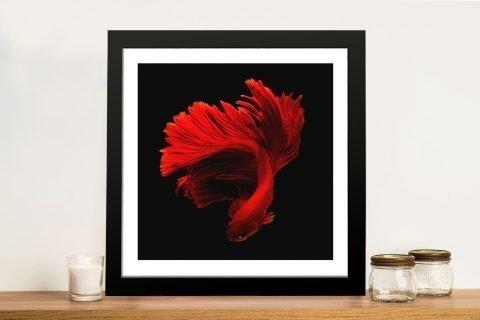 Siamese Fighting Fish Quality Canvas Print