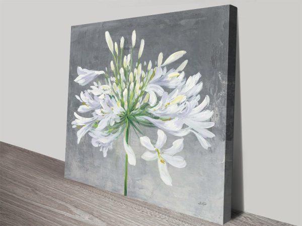 Cleome Splash High-Quality Floral Art AU
