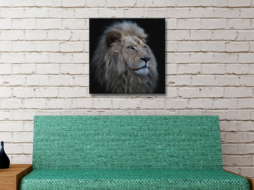 The Lions Pride Wildlife Photography Art AU