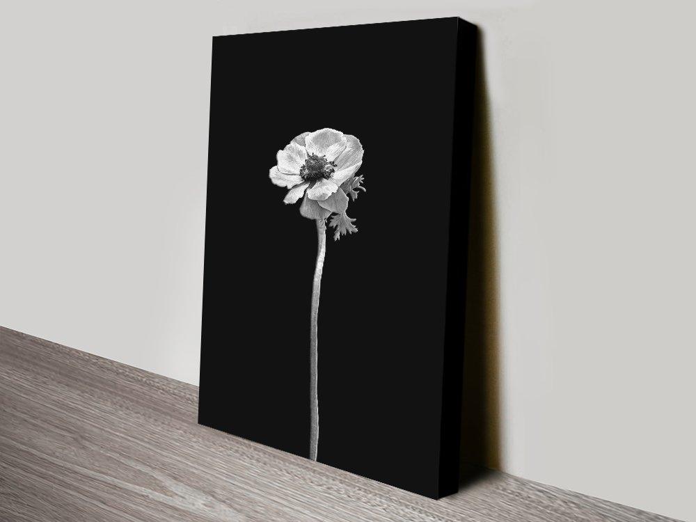 Anemone Coronaria Floral Black & White Art