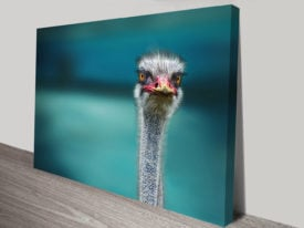 Ostrich Canvas Wall Art Photo