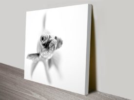 grumpy goldfish wall art canvas print