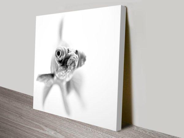 grumpy goldfish wall art canvas print