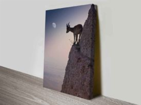 mountain goat custom photo into canvas art