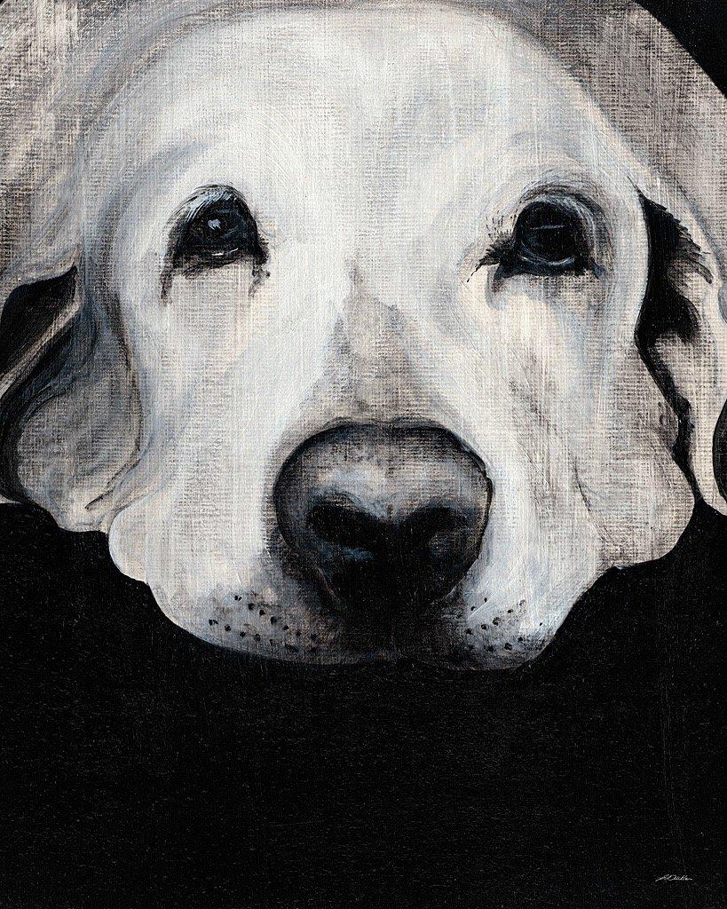 Sparta I Labrador Dog Wall Canvas Print
