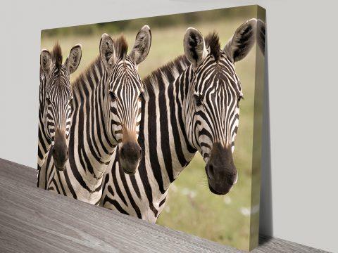3 Zebras Canvas print