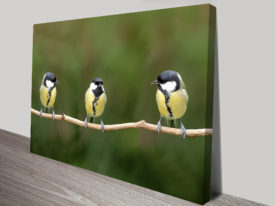 3 great tits on branch Photo Canvas printing