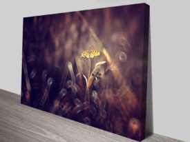 fall butterfly canvas photo print online