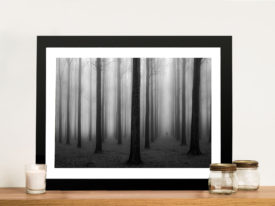 Framed Picture Forest Mists Trees Black and White