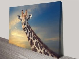 Head Above the Rest Giraffe African Wildlife Photography Canvas Art Print