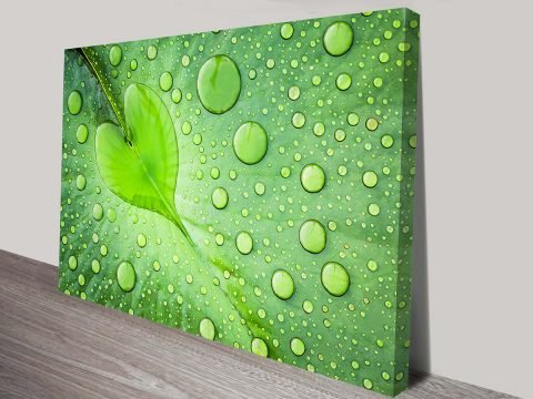Green Leaf with Water Drops Stretched Photo Wall Print