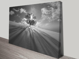 Lone Tree Black and White Photographic Canvas Wall Art Print Australia