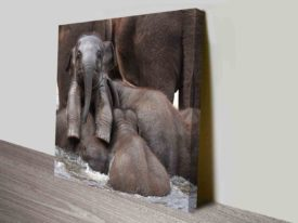 Bathing Baby Elephant Wildlife Photography Square Canvas Wall Art