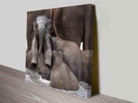 Bathing Baby Elephant Wildlife Photography Square Canvas Wall Art