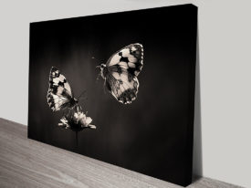 Black and White Butterflies Insect Photograph Art Canvas