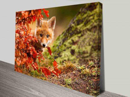 curious baby fox wall art canvas print