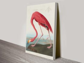 American Flamingo John James Audubon Wildlife Canvas Wall Art