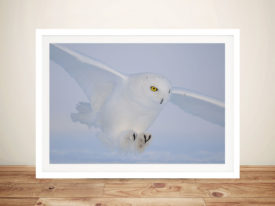 Snowy owl Photo Wall Art Framed Print on Canvas Australia