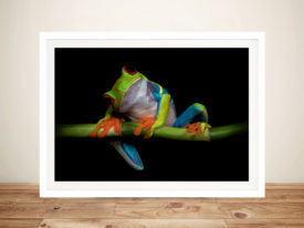 Colourful Frog Photo Framed Wall Art