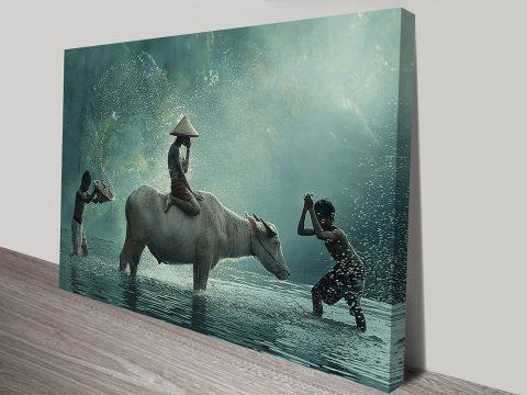 Bathing a Water Buffalo Asia Ready to Hang Mounted Art Print Australia