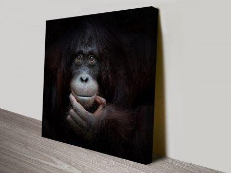 Orangutan Wildlife Photographic Wall Art Australia