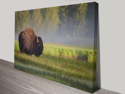 the lone buffalo canvas wall art