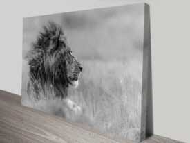the majestic king lion canvas wall art