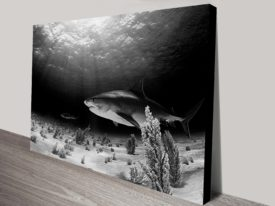 Shark Pictures on Canvas
